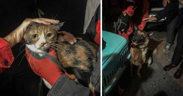 câine poliţist a salvat o pisică