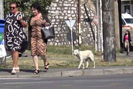 merge după oameni pe stradă